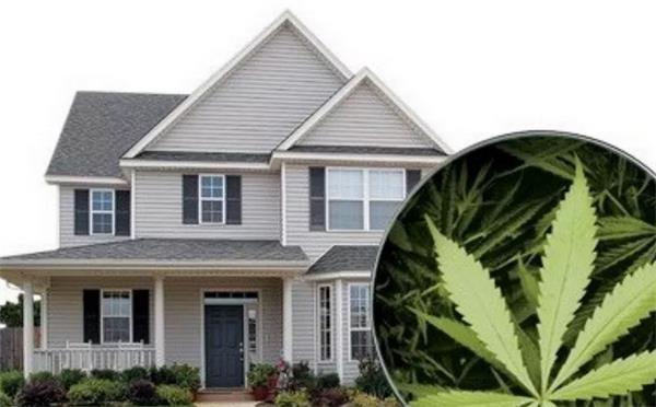 【置业知识】- 大麻限制性合法后,如何识别大麻屋以及卖家在售卖大麻8