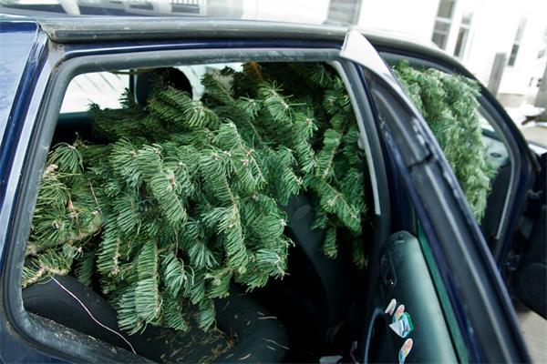 谁来点亮圣诞树顶那颗星3