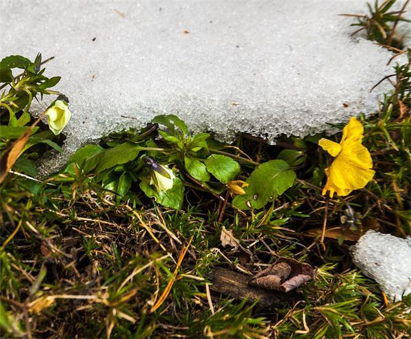 你的花园准备好过冬了吗?(上)3