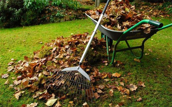 你的花园准备好过冬了吗?(上)4