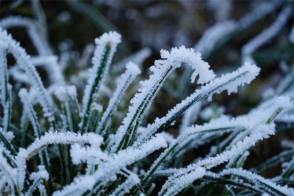 你的花园准备好过冬了吗?(上)5