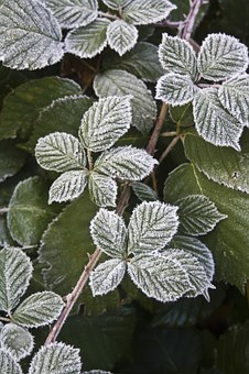 你的花园准备好过冬了吗?(下)2