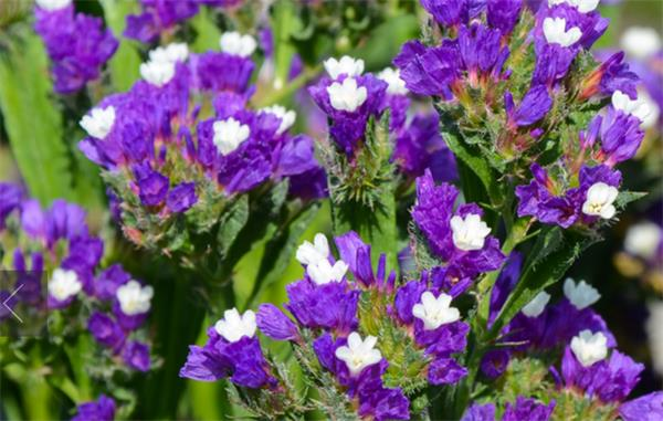 6种最易于养护的室内植物2