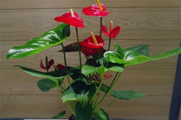 6种最易于养护的室内植物4
