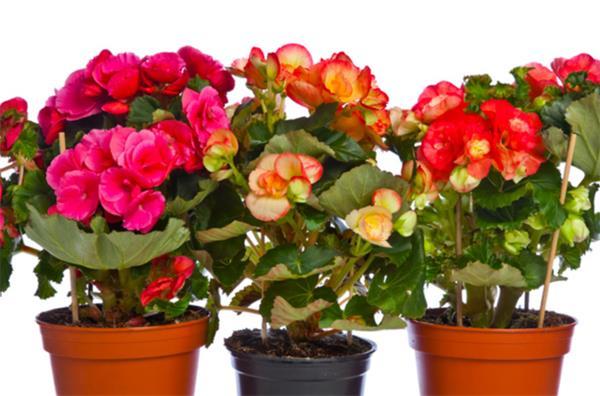 6种最易于养护的室内植物8