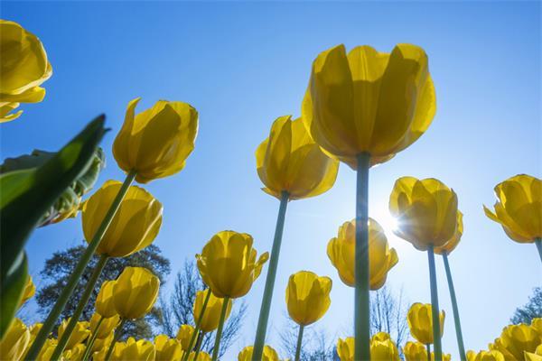 加拿大花园新手入门从春季开始1