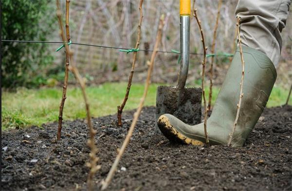 加拿大花园新手入门从春季开始4