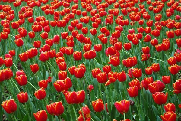 【收藏】让鲜花开满你的庭院3