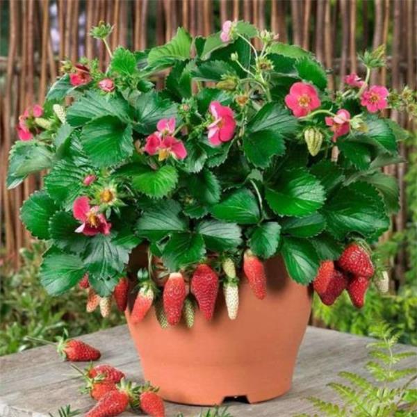 【收藏】让鲜花开满你的庭院5