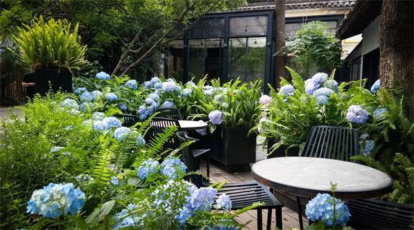 【收藏】让鲜花开满你的庭院6