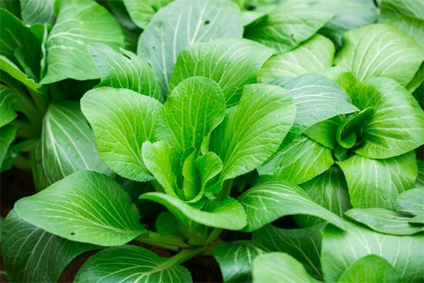 【收藏】不同蔬菜有不同的清洗方式10