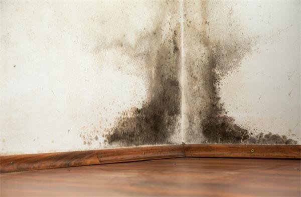连续阴雨,小心引发墙壁霉菌生长2