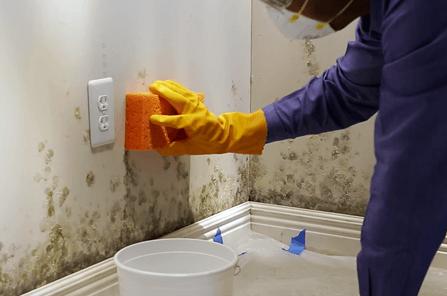 连续阴雨,小心引发墙壁霉菌生长7