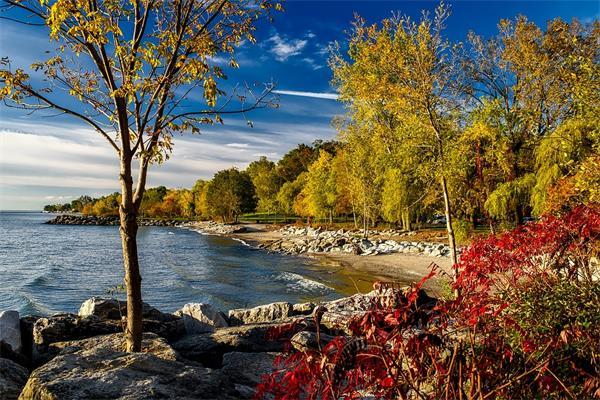 领略秋天又一壮观景象!加拿大三文鱼洄游1