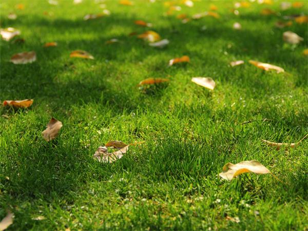 金秋十月,你的花园应该这样做…4
