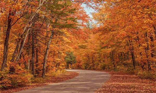 讲究!加拿大人秋天都做些什么?2