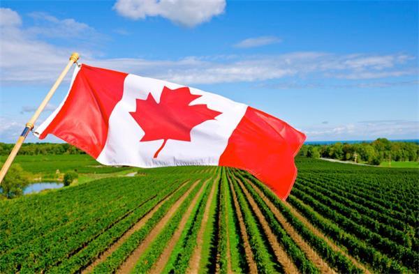加拿大农民表示,中国人民有口福啦!5