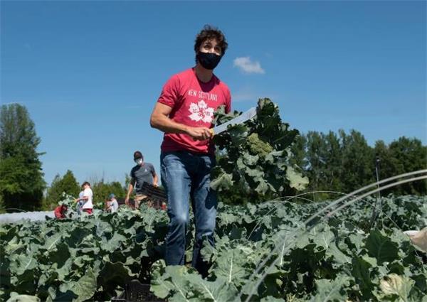 加拿大喜迎特殊国庆日!特鲁多在农场做义工!皇室成员视频庆祝!10