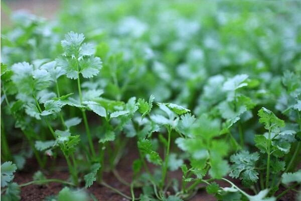加拿大房产-室外花园-植物-ehouse411
