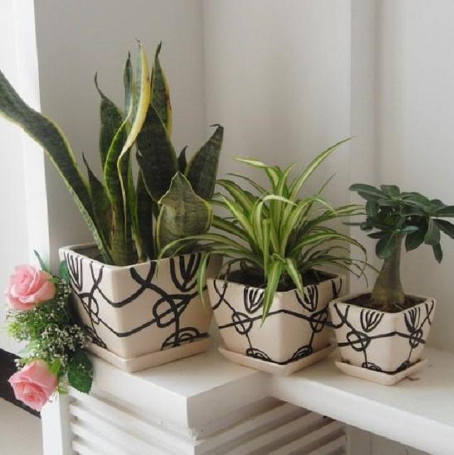 加拿大房产-室内室外-植物-净化空气-ehouse411