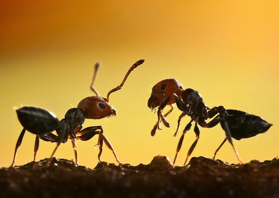 加拿大房产-室内室外-清除蚂蚁-ehouse411