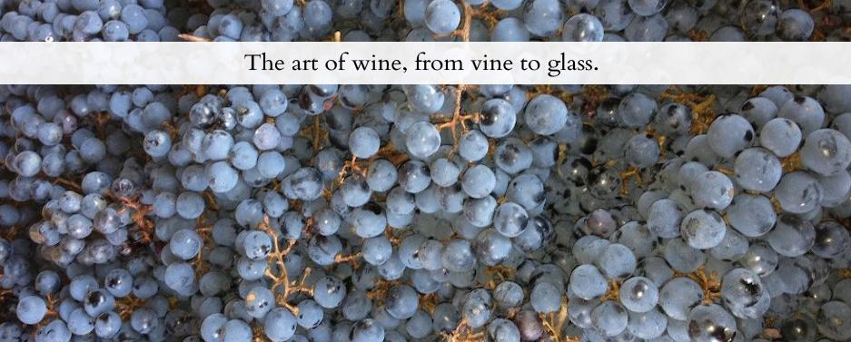 加拿大 安省 移民 酒庄 葡萄酒