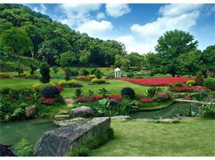 今年春夏你的花园里最易种植的花卉