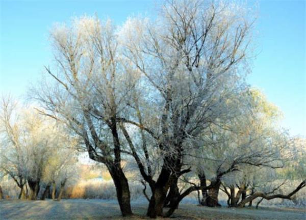 """享受夏日最后的温暖!""""拉尼娜""""将导致今冬异常天气酷寒多雪!1"""