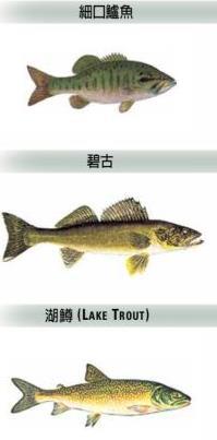 【收藏】休闲+运动+省钱!在加拿大钓鱼一举多得3