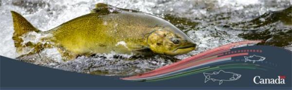 【收藏】休闲+运动+省钱!在加拿大钓鱼一举多得7