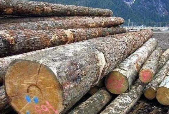 囤木材!北美地区木材价格暴跌!对房产市场有何影响?2