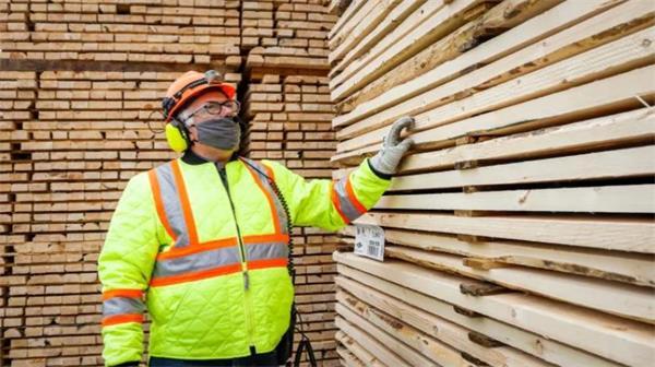 囤木材!北美地区木材价格暴跌!对房产市场有何影响?5