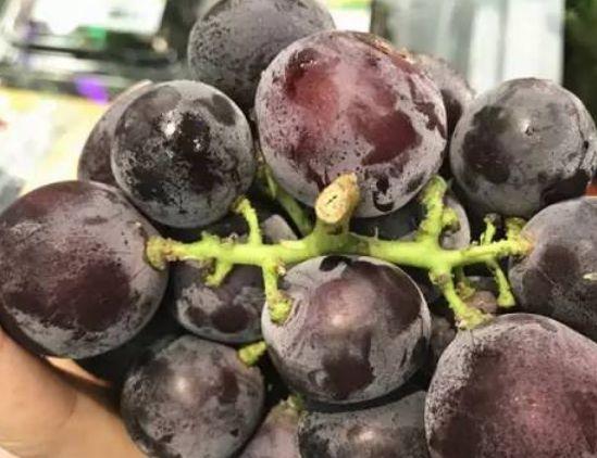 水果也分公母?加拿大秋季瓜果挑选秘诀! 2
